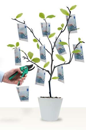 Money tree with 20 Euro ready to harvest Stock Photo
