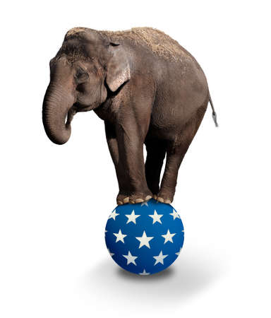 elefantes: Equilibrio Domesticado elefante asiático en una bola Circus.
