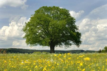one single tree in springtime Stock Photo