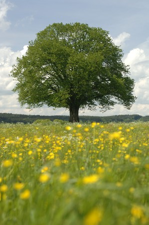 one single tree in springtime Stock Photo