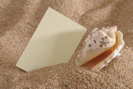 shell at sunny ocean beach photo
