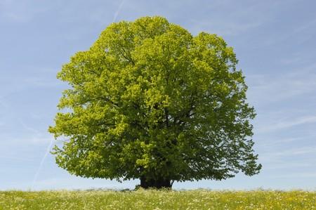 single tree Stock Photo - 8020853