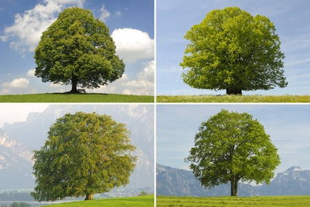 single tree collage Stock Photo - 8382161