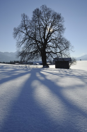 single tree and cottage in winter photo