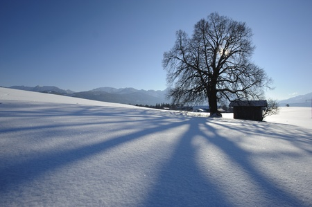 single tree in winter snow photo