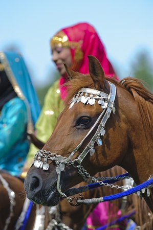 MUNICH, GERMANY - JUNE 4:  portrait of arab horse with silver bridle of the arabian -Royal Cavalry of Oman- while a public show at international equestrian challenge -Pferd International 2011- at June 4, 2011 in Munich, Germany