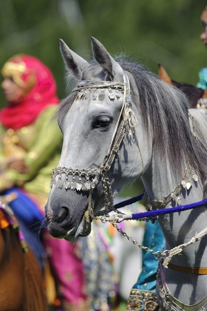 MUNICH, GERMANY - JUNE 4:  portrait of arab horse with silver bridle of the arabian -Royal Cavalry of Oman- while a public show at international equestrian challenge -Pferd International 2011- at June 4, 2011 in Munich, Germany Stock Photo - 9671637