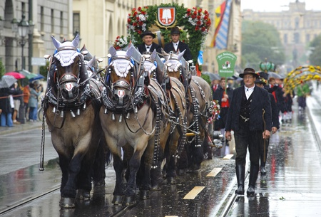 MUNICH, GERMANY - September 18:  public opening parade of world biggest beer folk festival oktoberfest in munich with 9000 performers and carriage of beer brewery, at September 18, 2011 in Munich, Germany