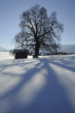 hut and tree in winter photo
