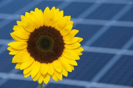 sun flower and solar panel photo