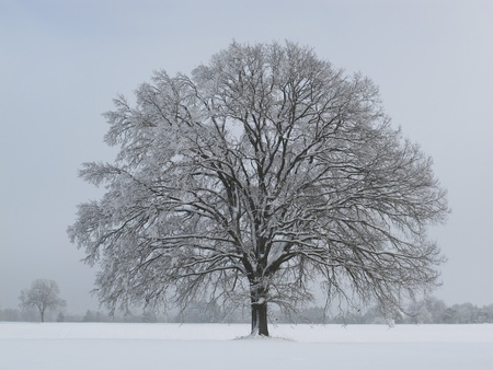 single tree: single tree in winter Stock Photo