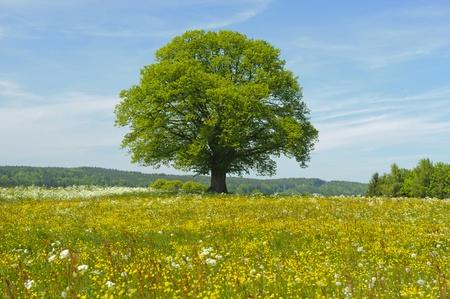 single tree at spring Stock Photo