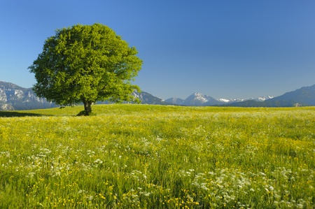 single tree at spring photo