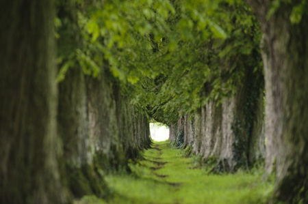 tree alley in summer with footpath