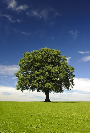 solitary tree: single linden tree at spring in meadow Stock Photo
