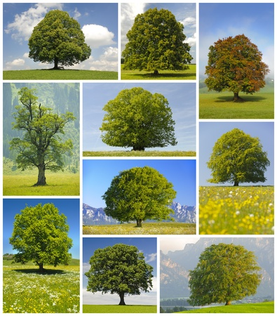 collage di grandi alberi Archivio Fotografico