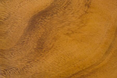 natural pattern of teakwood photo