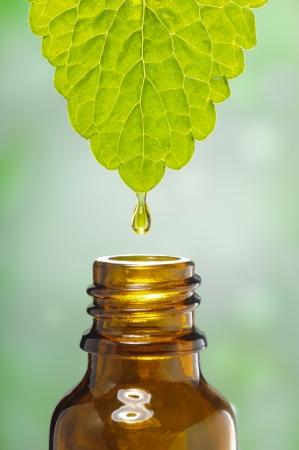 liquido scende da foglia come simbolo per la medicina a base di erbe alternative Archivio Fotografico
