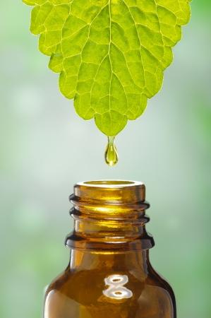 medicina natural: l?quido desciende por debajo de la hoja como s?mbolo de la medicina alternativa a base de plantas Foto de archivo