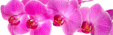 orchid in panorama photo