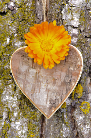 wooden carved heart with flowers at tree bark as symbol for love photo