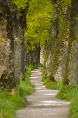 foot path: tree alley with foot path Stock Photo