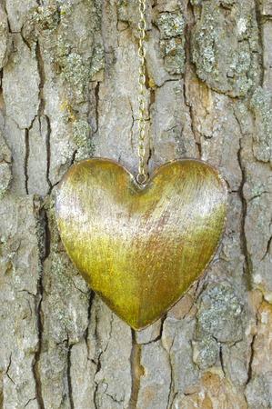 heart on tree bark photo