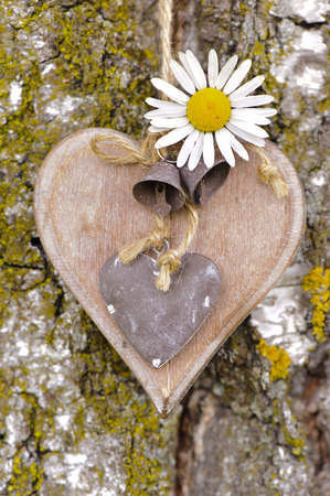 wooden heart on tree bark photo