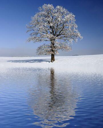 mirroring: single big old tree mirroring on water surface
