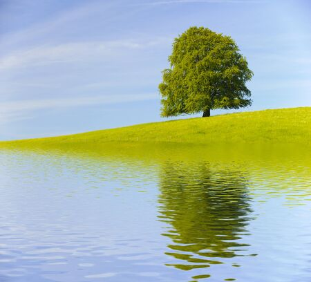 single big old tree mirroring on water surface Stock Photo