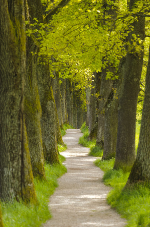 foot path: long tree alley with small foot path in Bavaro Stock Photo