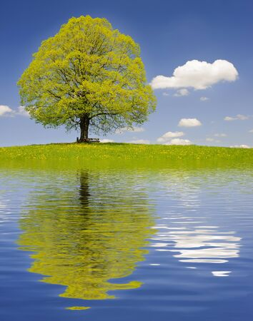 grote oude lindeboom spiegelen in het meer
