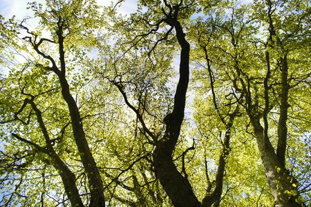 tree detail: detail of tree with branches and leaves at spring