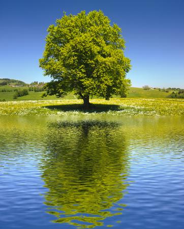 enkele grote oude boom spiegelen op het wateroppervlak Stockfoto