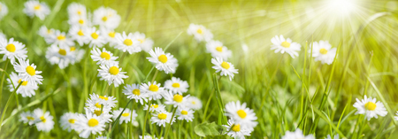 spring meadow with beautiful flowers and sun rays in background Stockfoto