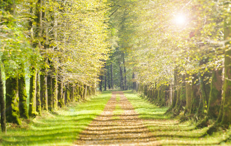 tree alley with sunbeams and path Stock Photo