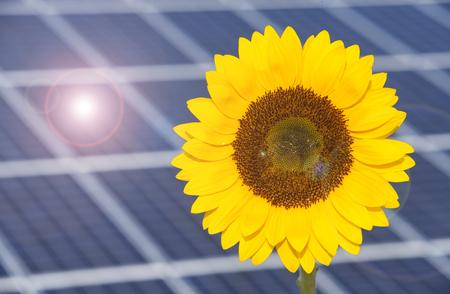 sun flower with solar panels for renewable enrgy