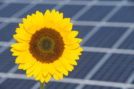 sunflower and solar panel of electric power station as symbol for renewable energy Stock Photo