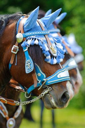 beautifully decorated horses on a catholic pilgrimage in bavaria, germany
