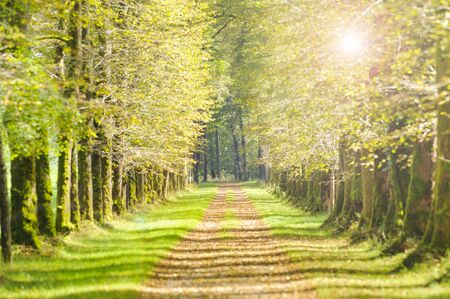 tree-lined avenue with sun and footpath Archivio Fotografico