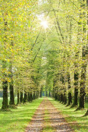 viale alberato con sole e sentiero