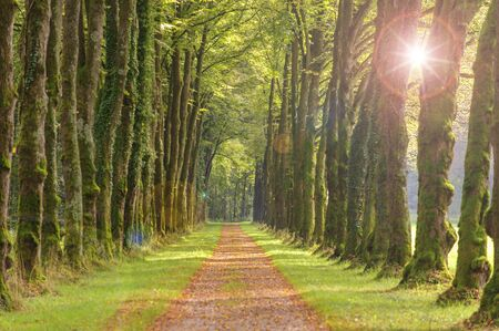 tree-lined avenue with sun and footpath Stock fotó