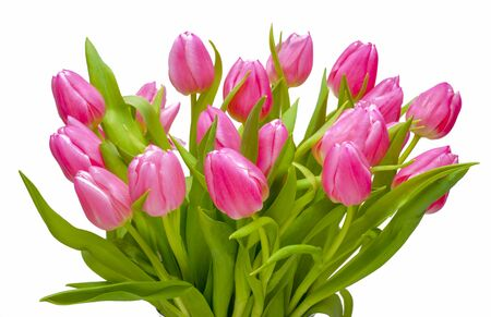 bunch of rose colored tulips