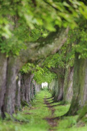 viale alberato con sentiero nel mezzo Archivio Fotografico