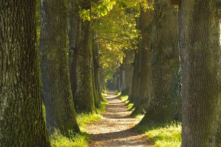 tree-lined avanue with diminishing perspective and small footpath Archivio Fotografico