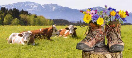 Wanderschuhe mit schönen Blumen auf Trekkingtour Standard-Bild