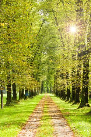 tree-lined avenue in park