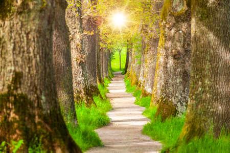 small footpath through oak tree alley