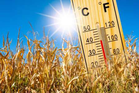 Heat in summer with high temperature and lack of water