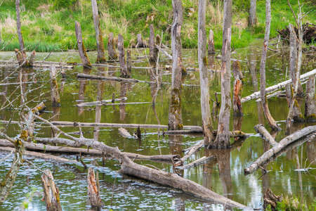 Biotopes with tree stumps in the water Stock Photo